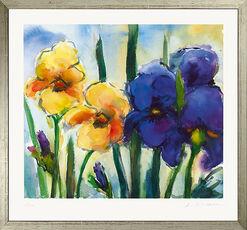 """Bild """"Iris gelb und blau"""", gerahmt"""