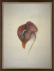 "Bild ""Anturium Scherzonicum"" (1981), gerahmt"