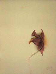 """Bild """"Orchidea III"""" (1981), ungerahmt"""