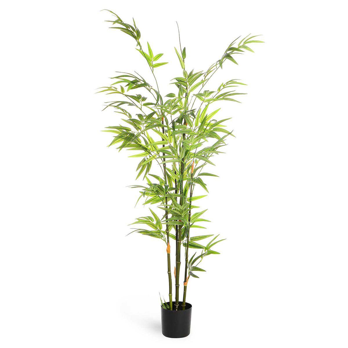bambusbaum in topf ca h 120cm gr n depot de. Black Bedroom Furniture Sets. Home Design Ideas