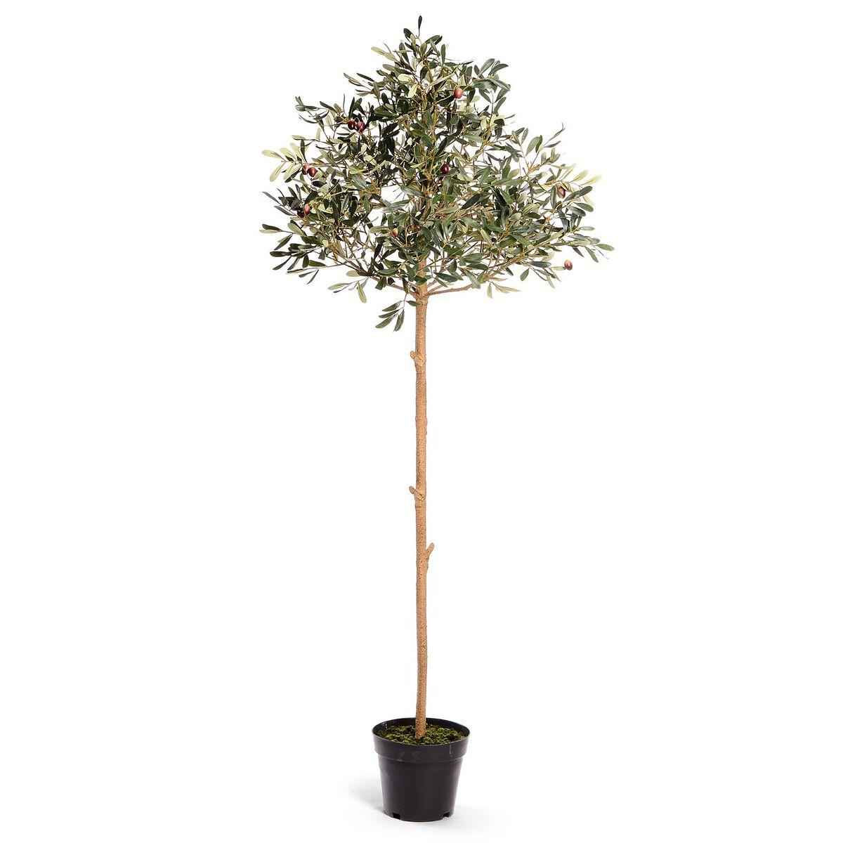 olivenbaum in topf ca l 1 56m dunkelgr n depot de. Black Bedroom Furniture Sets. Home Design Ideas